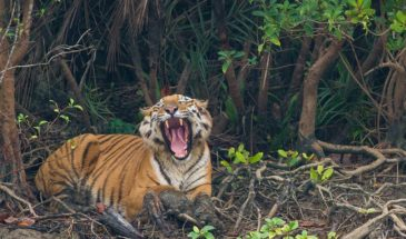 03 Days Sundarban Package